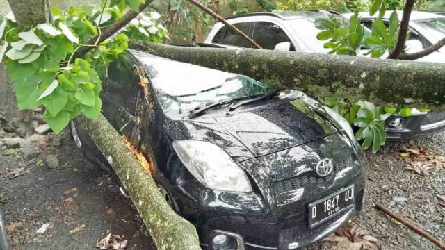 Salah satu mobil mahasiswa yang tertimpa pohon di parkiran stupa. Dok/Berbagai sumber